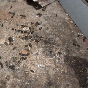 Momo Station, Aldershot, pest infestation